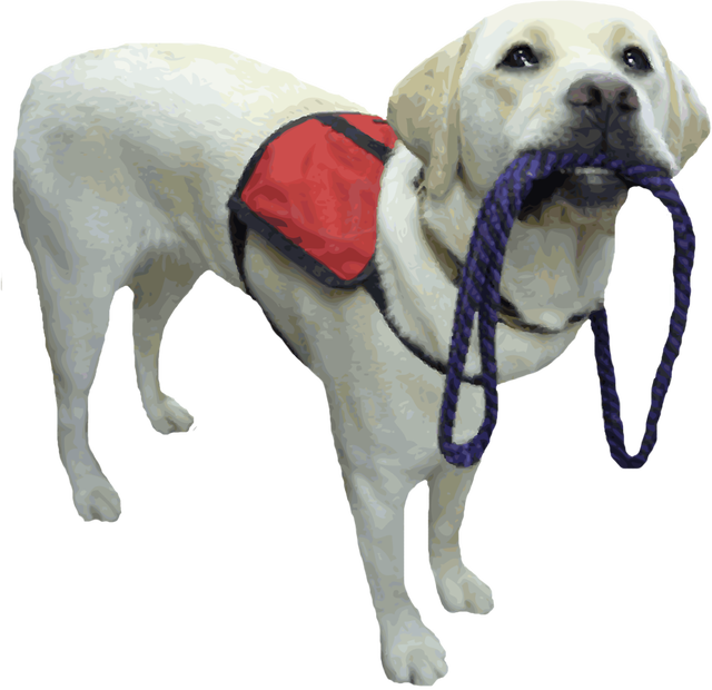 Assistance-Dog.png